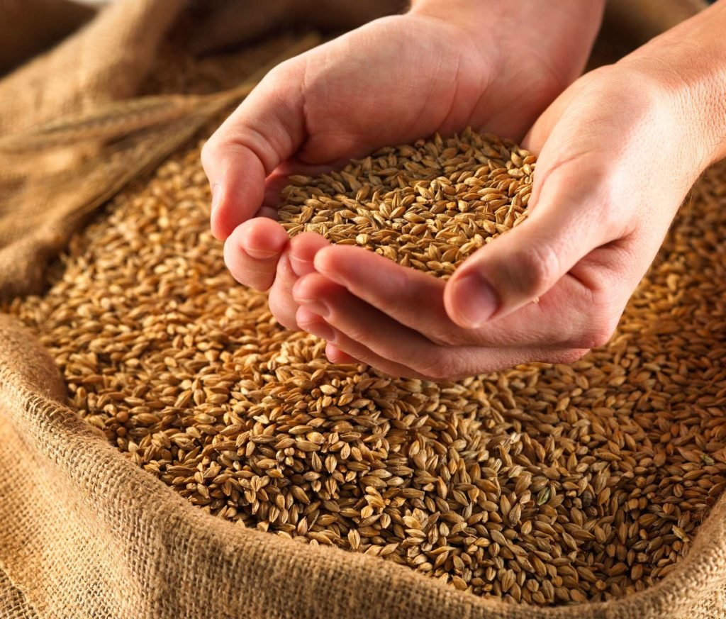 пшеница онлайн